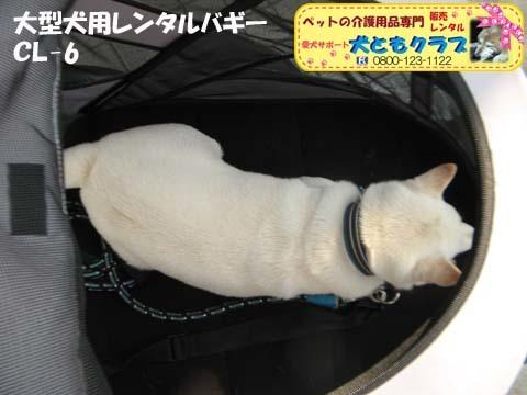 大型犬用レンタルペットバギーCL-6 12.jpg