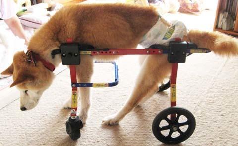 柴犬リュウくん2012090901.jpg
