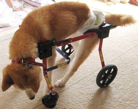 柴犬リュウくん2012090902.jpg
