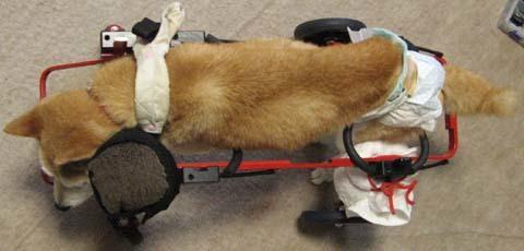 柴犬リュウくん2012091502.jpg