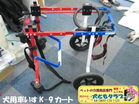 犬用車椅子ダルメシアンのMayちゃん2017082208.jpg