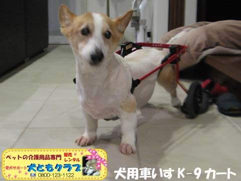 犬用車椅子K9Cartsコーギーの玄太くん用2017101302.jpg
