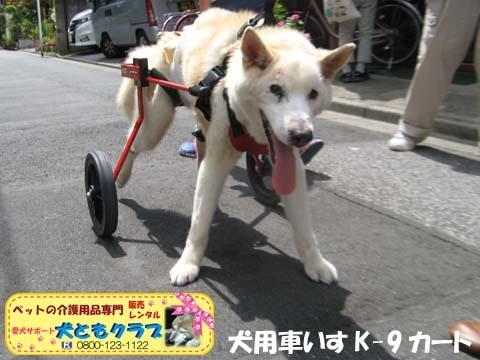 犬用車椅子K9カート トト丸くん用2017082901.jpg