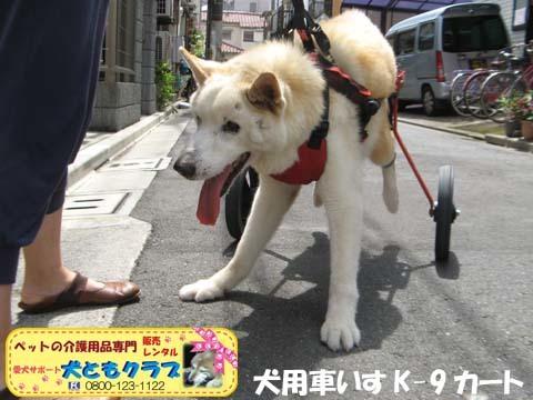 犬用車椅子K9カート トト丸くん用2017082902.jpg