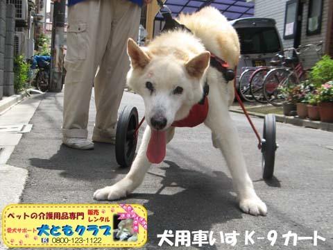 犬用車椅子K9カート トト丸くん用2017082903.jpg