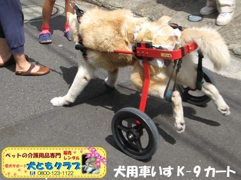 犬用車椅子K9カート トト丸くん用2017082905.jpg