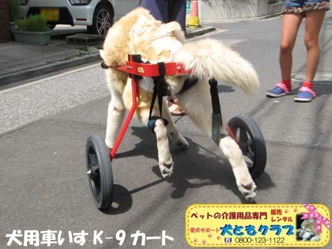 犬用車椅子K9カート トト丸くん用2017082910.jpg
