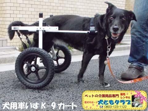 犬用車椅子K9カート ミックス犬のノアールちゃん2018011801.jpg