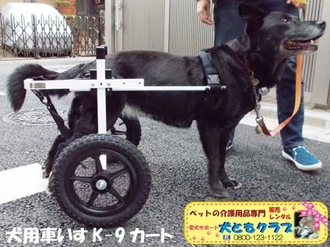 犬用車椅子K9カート ミックス犬のノアールちゃん2018011803.jpg