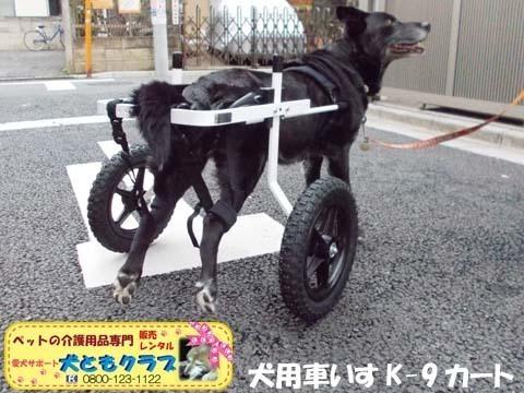 犬用車椅子K9カート ミックス犬のノアールちゃん2018011804.jpg