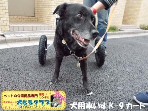 犬用車椅子K9カート ミックス犬のノアールちゃん2018011806.jpg