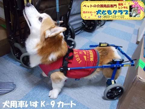 犬用車椅子K9カートコーギーのロビンくん用2017112504.jpg