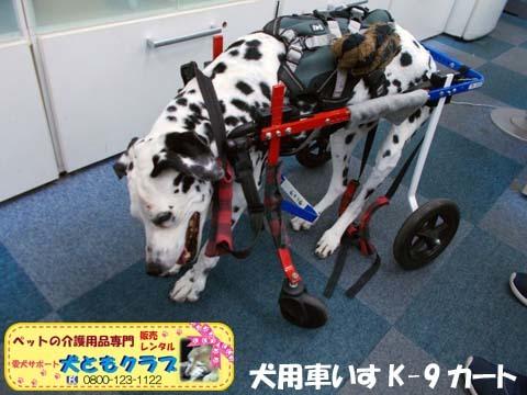 犬用車椅子K9カートダルメシアンのMayちゃん用2017120503.jpg