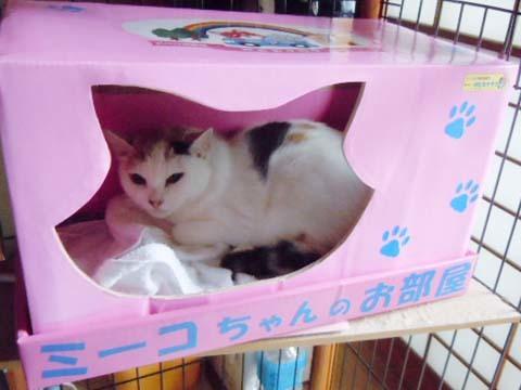 猫のミーコちゃん.jpg