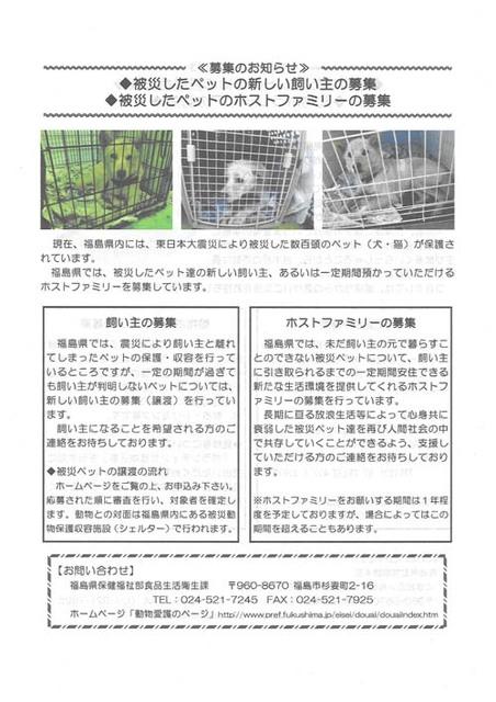 被災したペットの新しい飼い主募集ブログ用.jpg