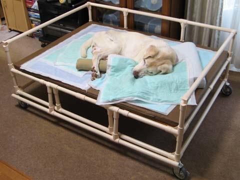 イレクターパイプ製老犬介護ベッド07.jpg