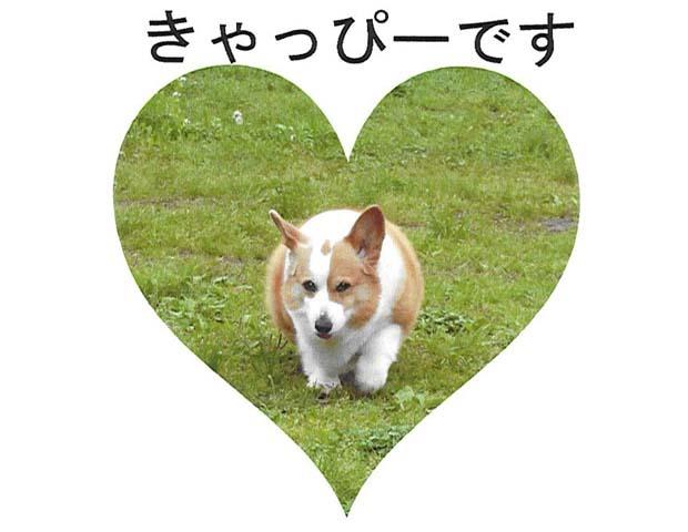 コーギーのきゃっぴーちゃんカード2.jpg