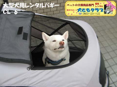 大型犬用レンタルペットバギーCL-6 09.jpg