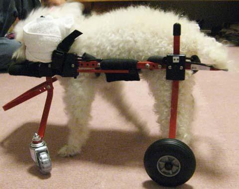犬用車いすトイプードルの詩音ちゃん用2012100402.jpg