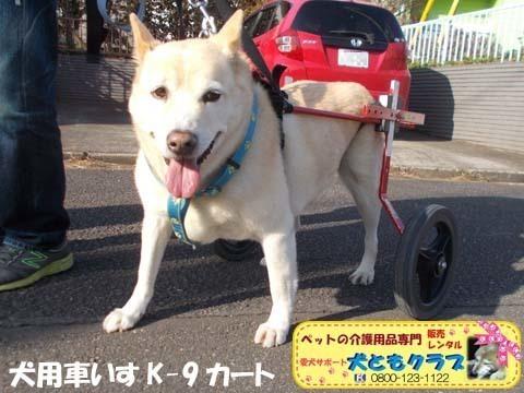 犬用車椅子 ジュンくん用20210116.jpg