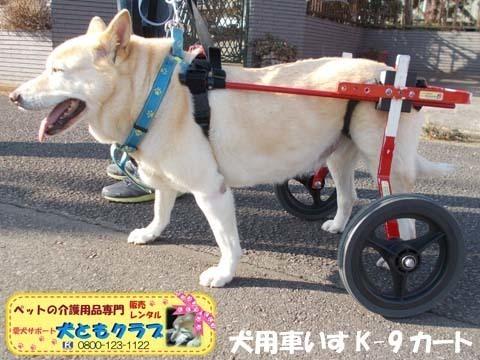 犬用車椅子 ジュンくん用2021011602.jpg