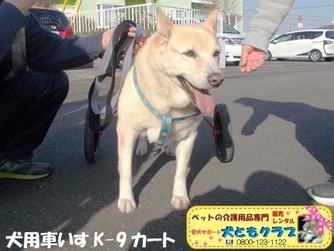 犬用車椅子 ジュンくん用2021011603.jpg