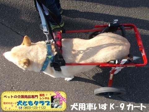 犬用車椅子 ジュンくん用2021011604.jpg