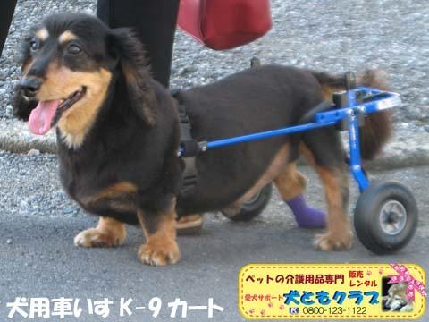 犬用車椅子ミニチュアダックスフントの卓くん用2017090201.jpg
