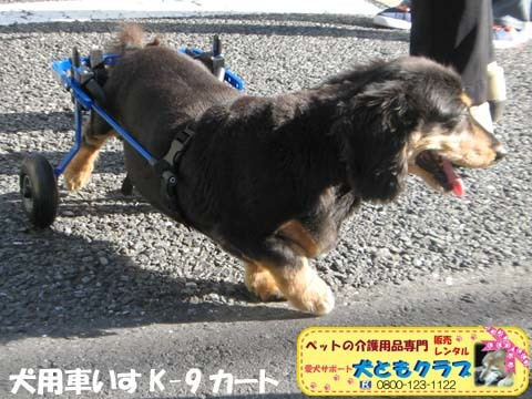 犬用車椅子ミニチュアダックスフントの卓くん用2017090202.jpg