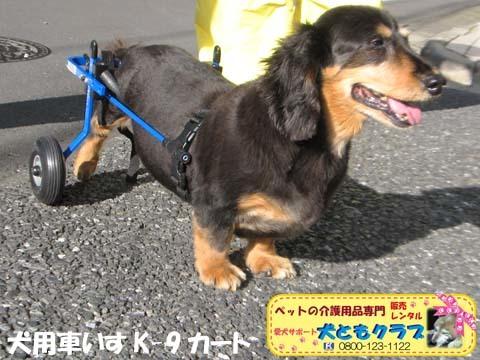 犬用車椅子ミニチュアダックスフントの卓くん用2017090203.jpg