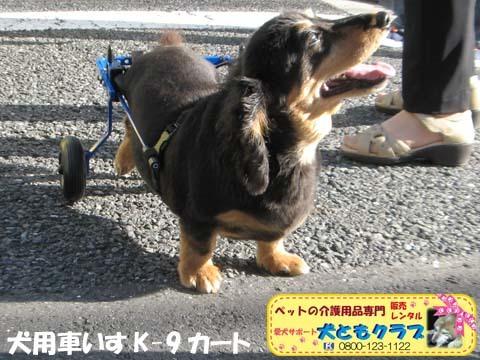 犬用車椅子ミニチュアダックスフントの卓くん用2017090204.jpg
