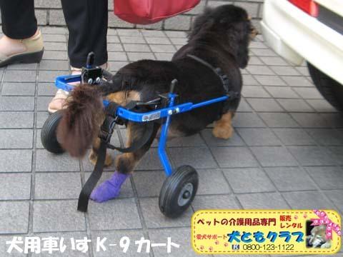 犬用車椅子ミニチュアダックスフントの卓くん用2017090207.jpg