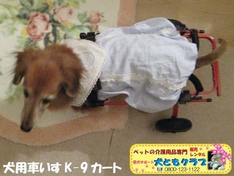 犬用車椅子K-9カート ミニチュアダックスフントのルビアーニちゃん2017090405.jpg