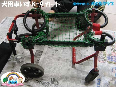 犬用車椅子K-9カートコーギーのアークくん2015013104.jpg