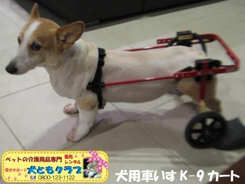犬用車椅子K9Cartsコーギーの玄太くん用2017101303.jpg