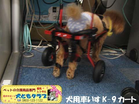 犬用車椅子K9カート トイプードルのあいちゃん用2015100104.jpg