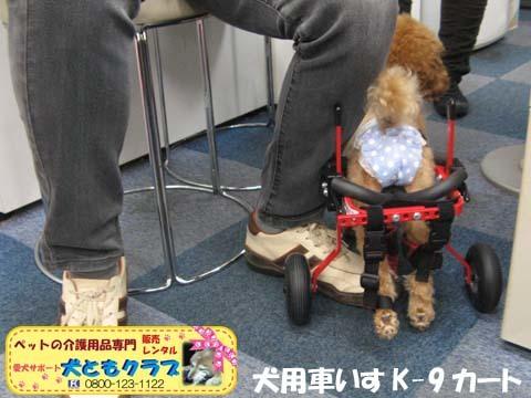 犬用車椅子K9カート トイプードルのあいちゃん用2015100105.jpg