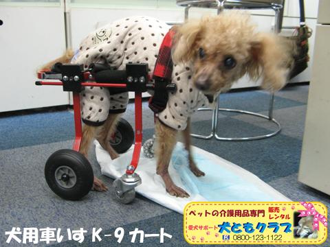 犬用車椅子K9カート トイプードルのパダちゃん2016040401.jpg