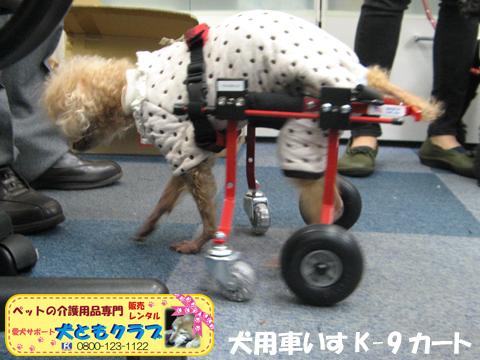 犬用車椅子K9カート トイプードルのパダちゃん2016040404.jpg