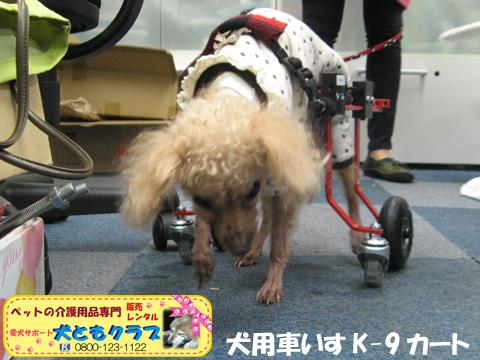 犬用車椅子K9カート トイプードルのパダちゃん2016040405.jpg