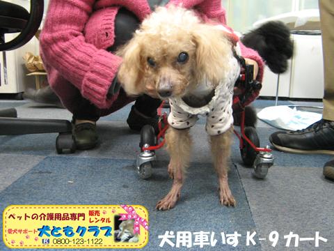 犬用車椅子K9カート トイプードルのパダちゃん2016040406.jpg