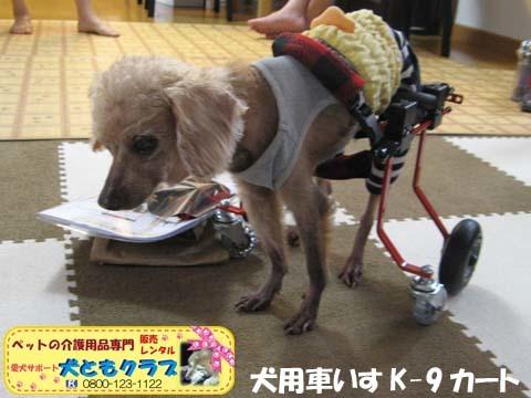 犬用車椅子K9カート トイプードルのパダちゃん2016051701.jpg
