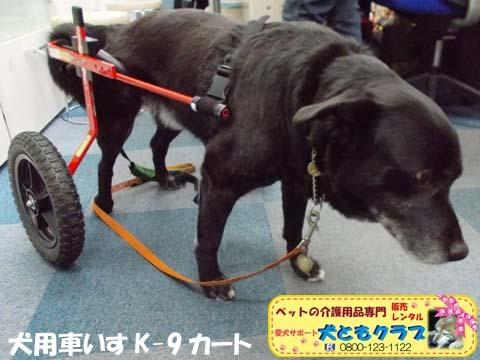 犬用車椅子K9カート ミックス犬のノアールちゃん201701122101.jpg
