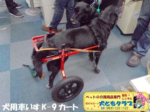 犬用車椅子K9カート ミックス犬のノアールちゃん201701122102.jpg
