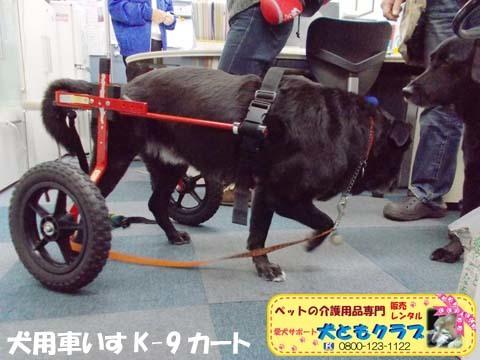犬用車椅子K9カート ミックス犬のノアールちゃん201701122103.jpg