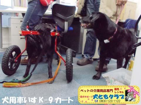 犬用車椅子K9カート ミックス犬のノアールちゃん201701122105.jpg