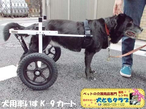 犬用車椅子K9カート ミックス犬のノアールちゃん2018011802.jpg