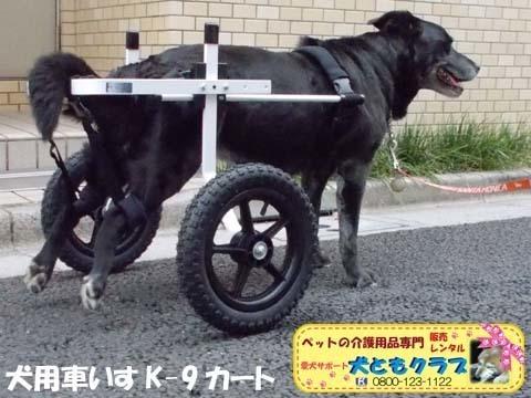 犬用車椅子K9カート ミックス犬のノアールちゃん2018011805.jpg