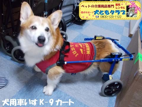 犬用車椅子K9カートコーギーのロビンくん用2017112501.jpg