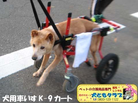 犬用車椅子K9カートゴン太くん用2017110206.jpg